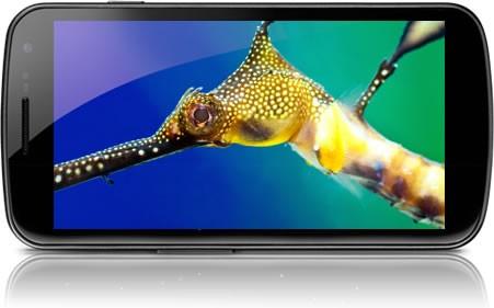 Samsung Galaxy Nexus: nuovo kernel per migliorare la qualità del display